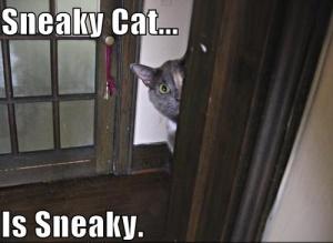 sneaky-cat.jpg?w=300&h=219