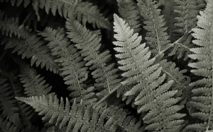 Ferns, 1920x1200