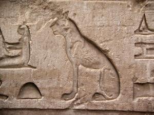 hiero-cat