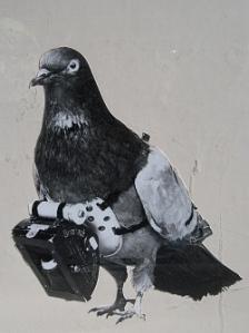 pigeon-camera