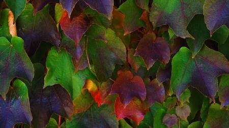 (RGB II, 2560×1440)