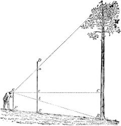 measuring-tree